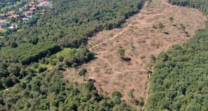Bakanlıktan 'Karaçam Ormanı' açıklaması