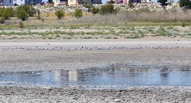 Cihanbeyli Göleti'nde balık ölümleri
