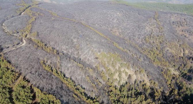 Kütahya'daki yangın 16 saatte kontrol altına alındı