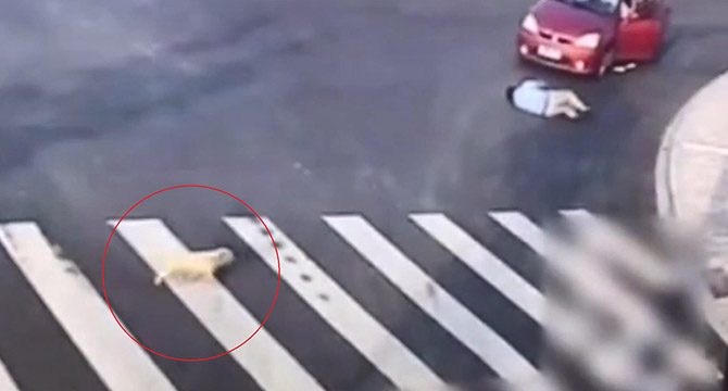 Çin´de köpekten yayalara `trafik dersi´