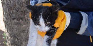 Ağaçta mahsur kalan kediyi belediye ekibi kurtardı