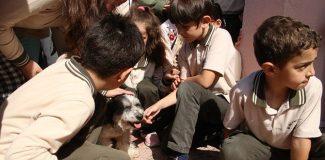 Okul yönetiminin sahiplendiği köpekler çocukların sevgilisi