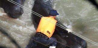 Yunus avına karşı `olimpiyatları boykot' çağrısı