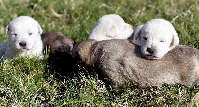Yavru köpekleri, ağzı bağlı çuval içinde ormana bırakmışlar