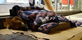 Karabük'te esnaf, sokak köpeğini battaniye ile ısıttı
