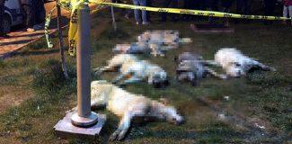 16 köpeği zehirleyen 3 kişi için 10'ar yıl hapis ve tutuklama kararı