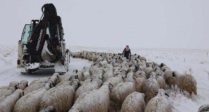 Tipide mahsur kalan 2 çoban ve koyun sürüsü kurtarıldı